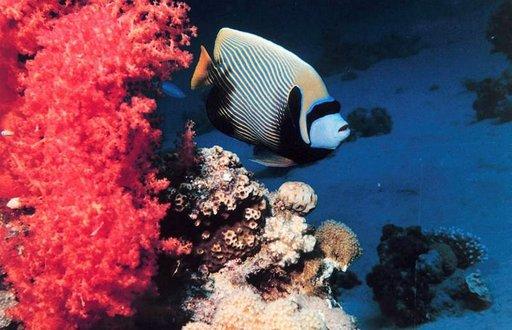Punainen meri huokuu upeita värejä ja eksoottisia kalalajeja.