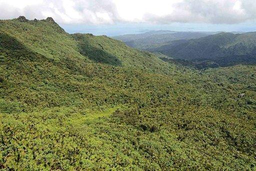 El Yunque kansallispuisto on sademetsää parhaimmillaan.