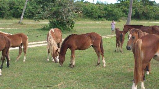 Monilla rannoilla voi nähdä hevosia käyskentelemässä.