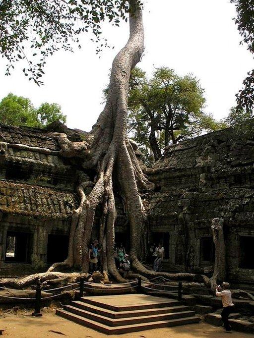 Viidakko söi Angkorin temppelit sisäänsä, kunnes ne löydettiin uudelleen vuonna 1864.