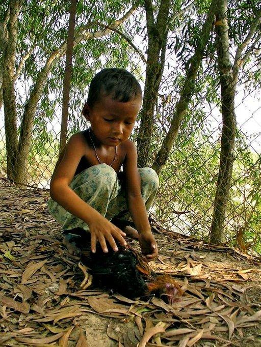 Joukkohautojen vieressä asuva khmerpoika, Nhean, käsittelee keskittyneesti juuri kiinni saamaansa kanaa.