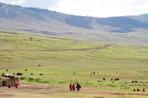 Maasaita laaksossaan Ngorongorokraatterin .kupeessa