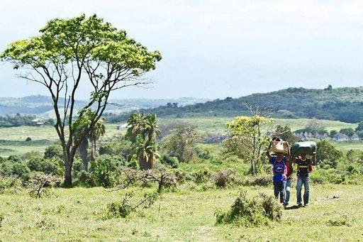 Kantajia matkalla Meru-vuoren huipulle Arushan kansallispuistossa.
