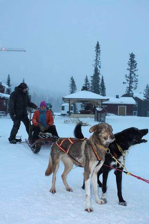 Välillä voi lähteä vaikka koiravaljakkoajelulle. Patrik Nääs vie kolmen tunnin ajelulle1-3 henkeä kerralla.