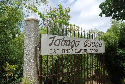 Tobago Cocoa Estaten 36 hehtaarista on käytössä 22 hehtaaria kaakaopuita varten.