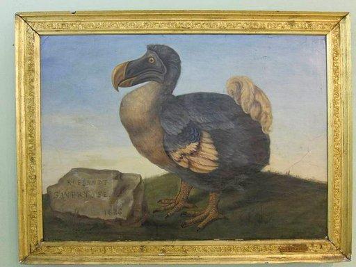 Tämä dodon potretti vuodelta 1626 komeilee yhä Port Louisin luonnontieteellisessä museossa
