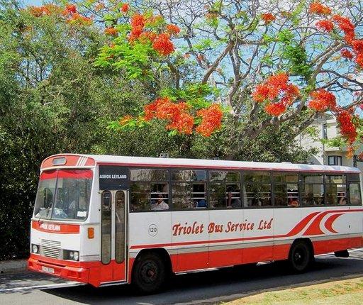 Moneen paikkaan pääsee helposti ja edullisesti värikkäillä paikallisbusseilla.