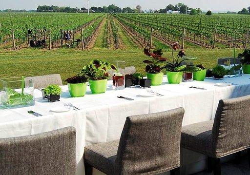 Niagaran niemimaa on kuuluisa myös yli 50 viinitarhastaan.