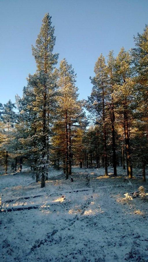 Vuokratun mökin osoitteessa saattoi pahimmillaan löytyä pelkkää metsää.