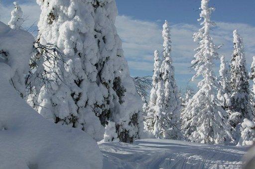 Lapin talvi ja Helsinki ovat kohteina, kun Finnair ja kiinalainen verkkoyritys alkavat myydä Suomen talvea.