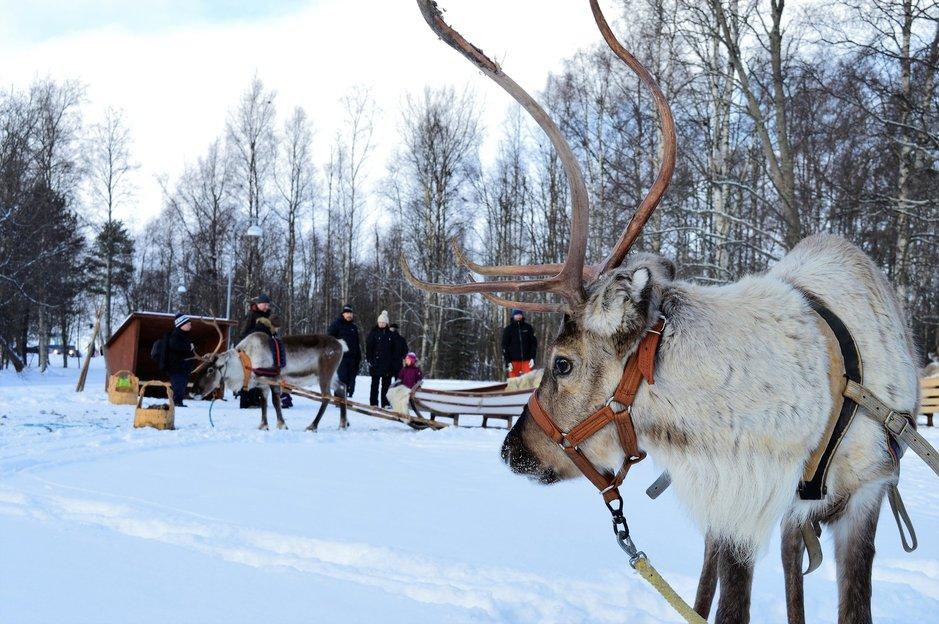 Oulun Nallikarin talvihuvipuisto<br /> avataan ensi lauantaina
