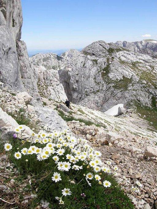 Luonnonkukat värittävät vuorten rinteitä.