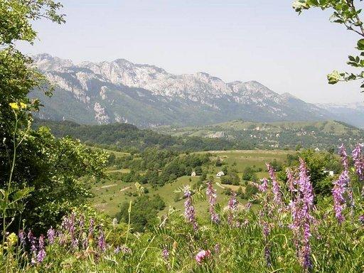 Montenegron kumpuilevaa maaseutua.