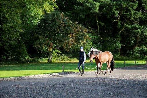 Castle Lesliessä on hyvä olla niin ihmisten kuin hevosten.