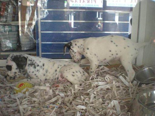 Koirakauppa Benidormissa.