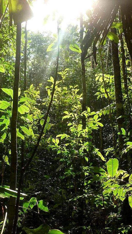 Viidakkokävelyllämme aurinko paistoi ja vettä satoi.