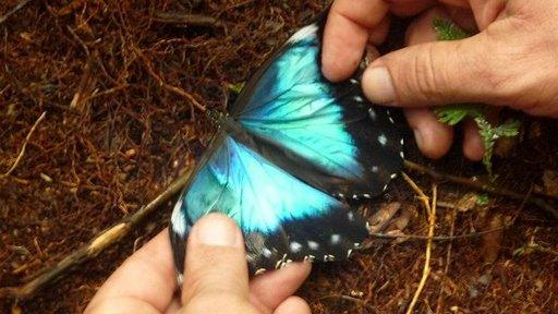 Viidakkokävelyllä nähdyllä perhosella oli loistavan kauniit siivet.