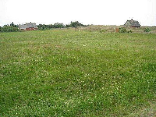 Mandøn vehreät maisemat houkuttavat luonnonystäviä.
