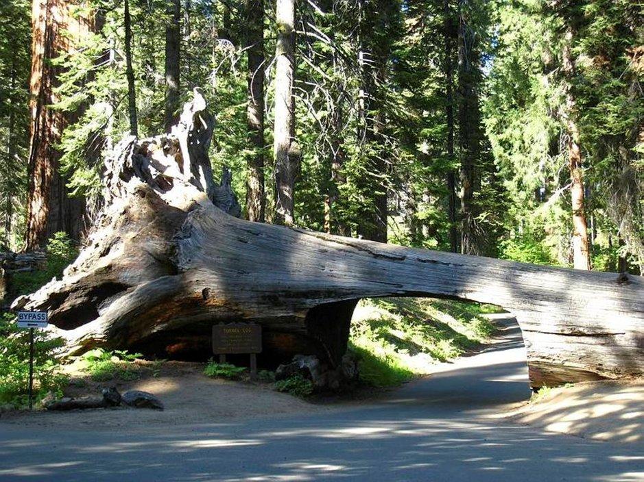 Tunnel Log, luova ratkaisu autotielle kaatuneen puun aiheuttamaan ongelmaan.