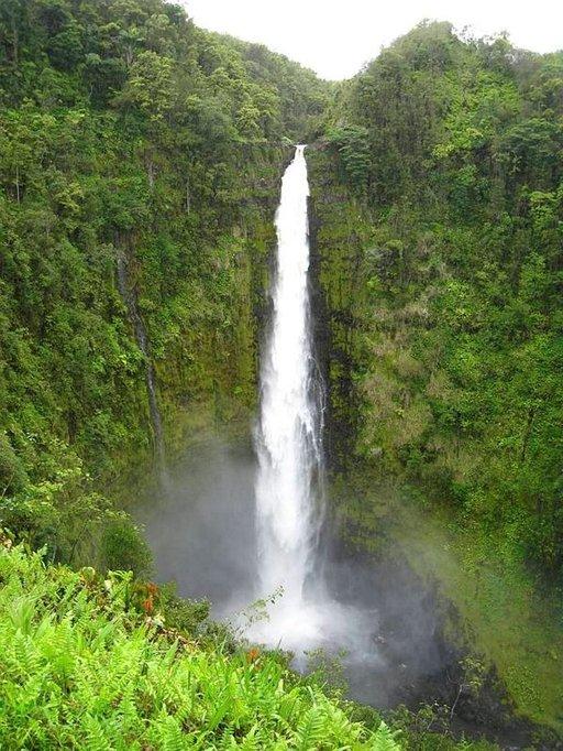 Akaka Fallsin vesiputous on piilossa keskellä sademetsää.