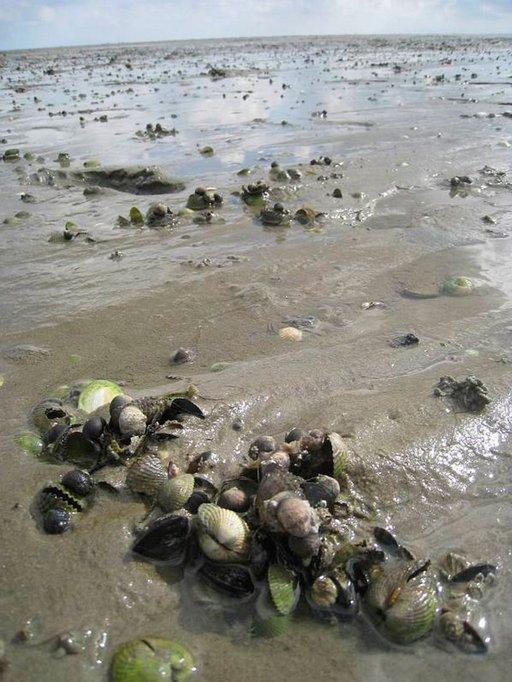 Paljain jaloin kulkeminen merenpohjalla on välillä haasteellista.