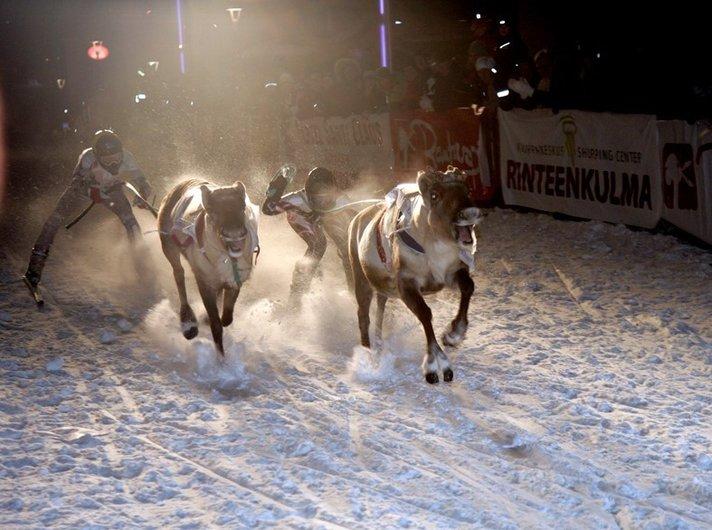 Porot kilpailevat kaduilla<br /> Rovaniemen keskustassa Helsinki