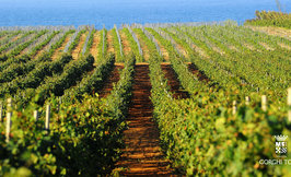 Sulfiitittomat Vegaanit viinit