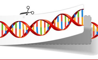 X2 vie CRISPR-Cas9 komponentit nisäkässoluihin